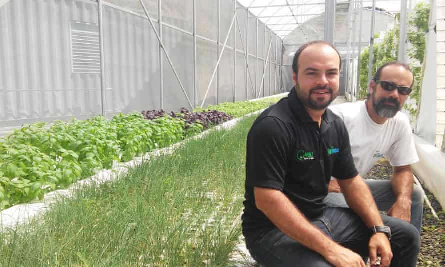 Jorge and Pedro Casas at one of their two greenhouses where they produce organic herbs.