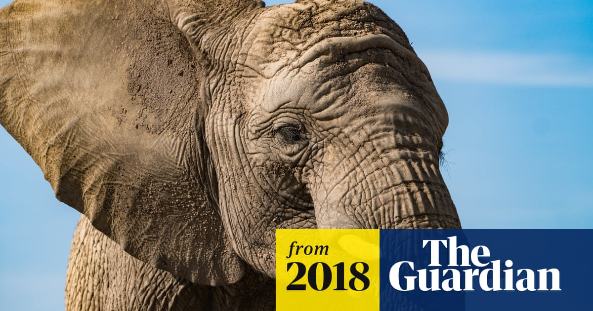 UK to tighten laws on 'abhorrent' ivory trade | Environment | The
