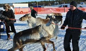 Reindeer racing in Finland