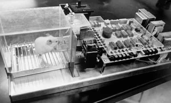 A laboratory rat inside a 'Skinner box'.