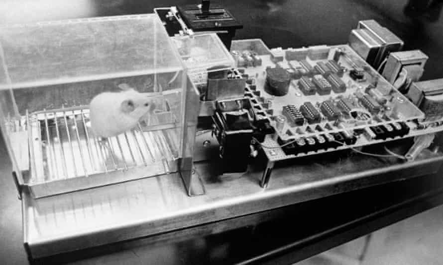 Lab rat pushing button to get food.