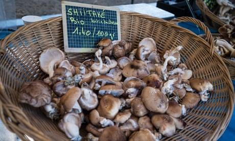 The secret to succesful shiitake mushrooms? Electric shock treatment