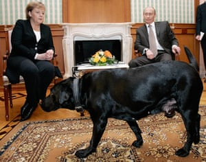 Putin and his dog, Connie, with the canine-fearing Angela Merkel
