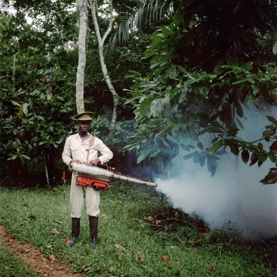 A man spraying pesticide on a cocoa crop in Ghana in 1958.