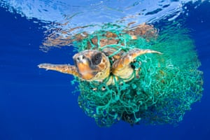 Caretta Caretta Trapped by Francis PerezWorld press photo awards: nature category, first prize, singlesA sea turtle entangled in a fishing net swims off the coast of Tenerife, Canary Islands, Spain. Sea turtles are considered a vulnerable species by the IUCN. Unattended fishing gear is responsible for many sea turtle deaths.