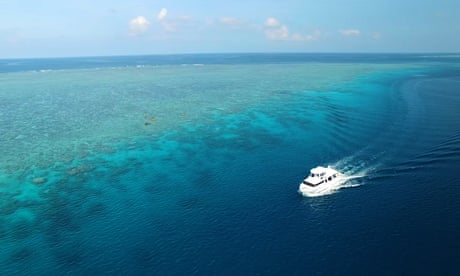 Devastation of world's coral reefs could cost $1tn – video
