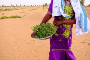 Will Africa's Great Green Wall discourage migration to