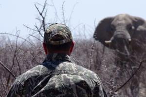 A trophy hunter tracks down an elephant.