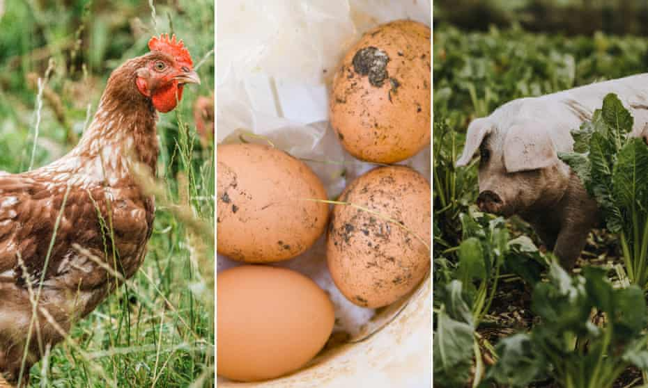 Free range chicken, eggs and pigs