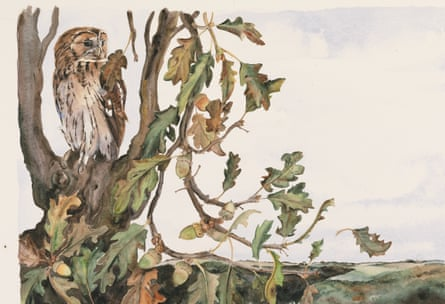 Illustration by Jackie Morris from Robert Macfarlane's The Lost Words