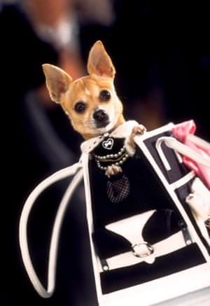 Bruiser (Chihuahua) from Legally Blonde 2: Red White & Blonde, 2003