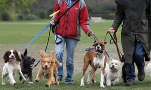 Dog walkers operating in the informal economy are among those likely to be earning below the minimum wage.