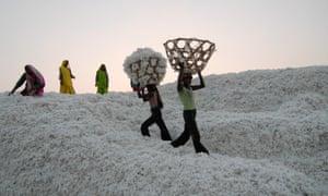 South asia Inda Madhya Pradesh , organic cotton project bioRe in Kasrawad - agriculture organic farming rural development | [ copyright (c) Joerg Boethling / agenda