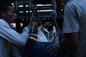 Fishermen haul their catch in Amapá's Calçoene municipality.