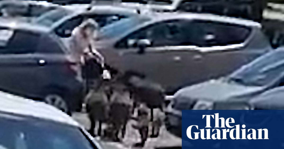 Wild boar surround woman near Rome and steal food shopping