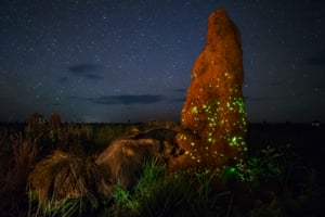 Marcio Cabral's photograph of an anteater approaching a glowing termite mound at night that was stripped of its Wildlife Photographer of the Year award prize after judges noticed the anteater pictured is almost certainly a stuffed animal