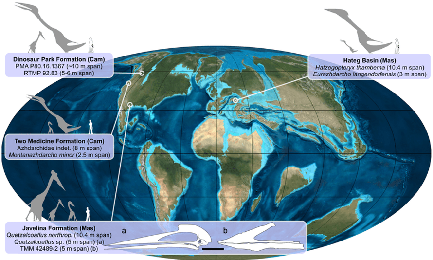 The distribution of azhdarchids in the Cretaceous.