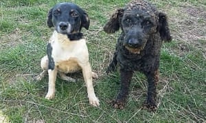 Weed, left, and Dice went missing from their home on the Otago Peninsula on October 17 last year