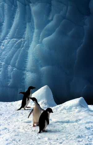Adelie penguins on ice near islands south of Buckle Island, in the Balleny group of islands, southern Ocean