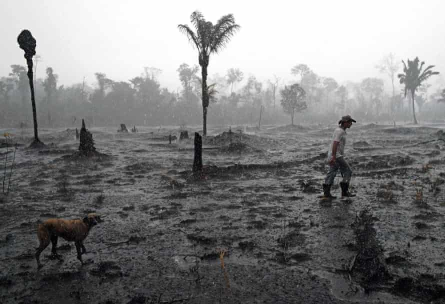 Brazilian farmer and dog walk through deforested area of Amazon in Rondonia state, Brazil.