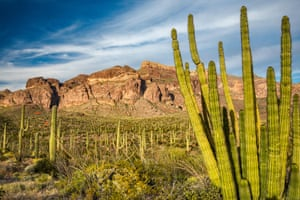 The Organ Pipe Cactus national monument, a federally protected wilderness area and Unesco-recognized international biosphere reserve.