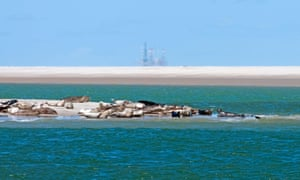 Harbour/Common seals (Phoca vitulina) sunbathing on sandbank with oil rig in the background, in Texel, Wadden Sea, the Netherlands.