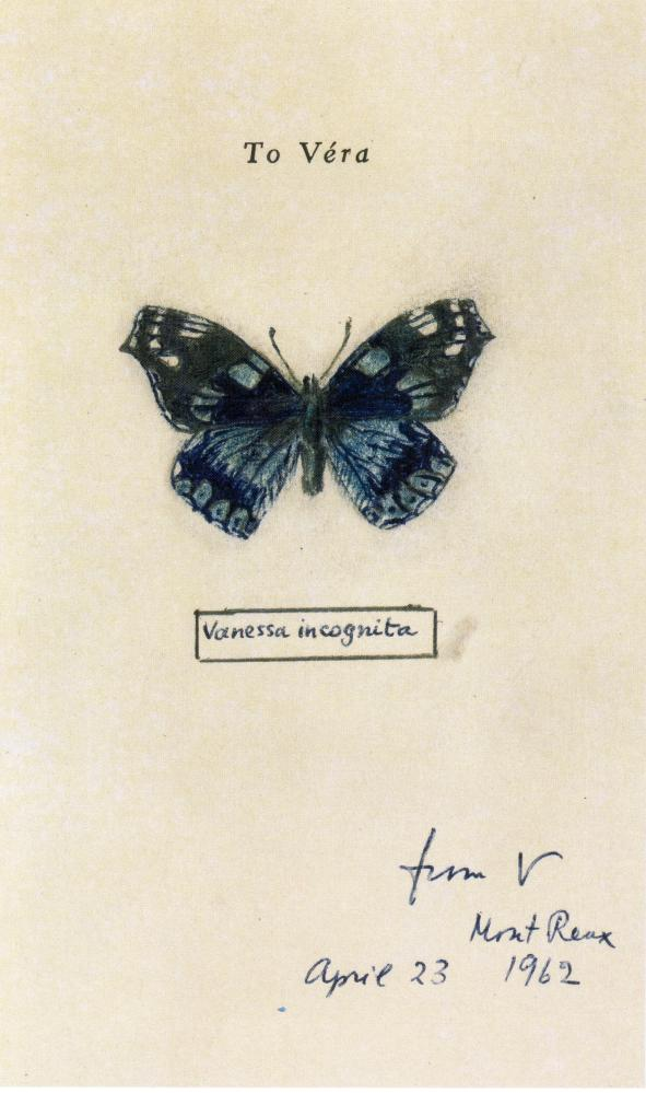 "[""Vanessa incognita""] Véra's Butterflies 24"