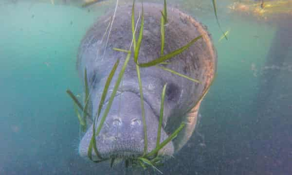 Runoff from agriculture, lawns and septic tanks is killing once abundant seagrass meadows.