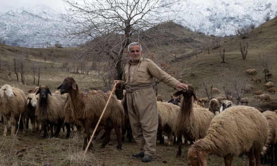 Barani Abdujubar Shexo, 67, tends to his flock of sheep in the hills surrounding Sheladze.