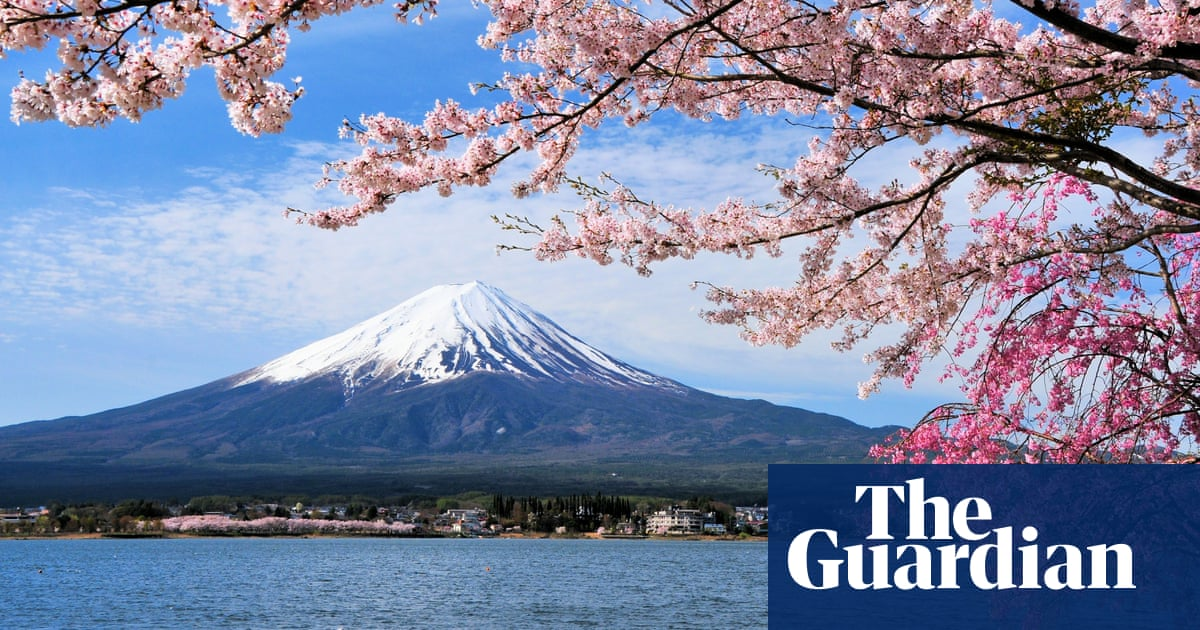 Typhoons Trick Japans Cherry Trees Into Blooming Months Early