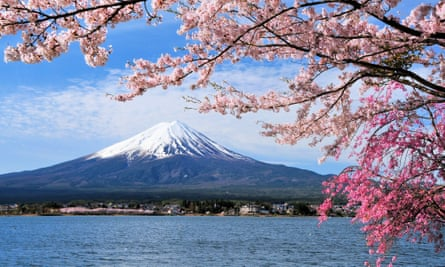 Mount Fuji and Cherry tree