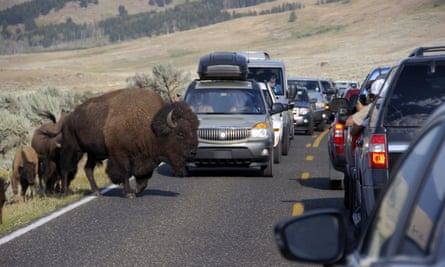 A large bison blocks traffic as tourists take photos of the animals in the Lamar Valley of Yellowstone National Park in Wyoming.