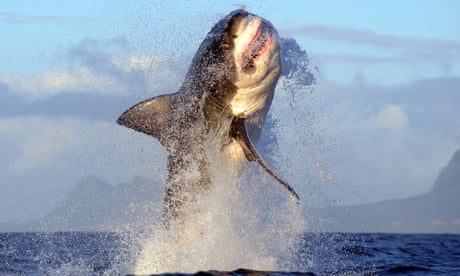 Power, majesty, wonder: the startling world of sharks – in pictures