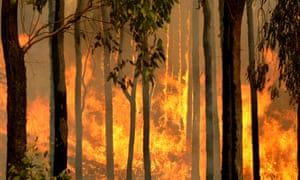 burning tree trunks