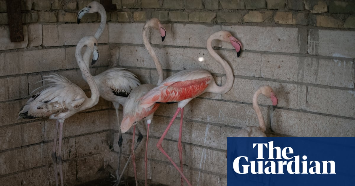 'Looking for a flamingo?': bird trafficking in Iraq – photo essay