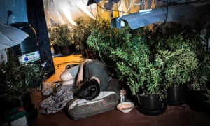 A recreation of a UK cannabis farm where trafficked boys are forced to tend to plants.