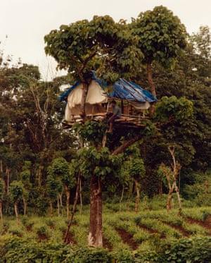 Farmer sitting on elephant watch tower