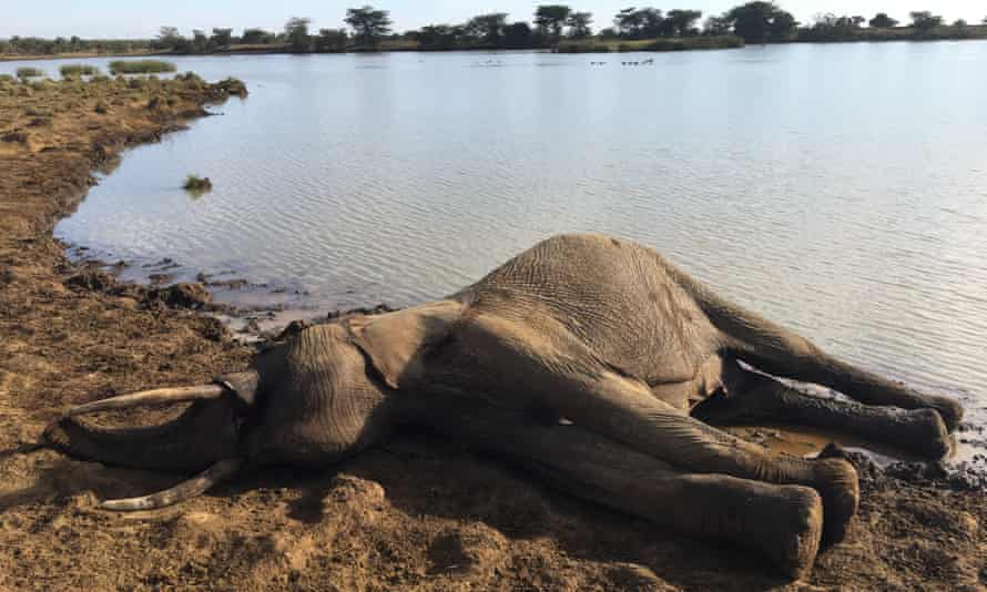 An elephant carcass found at a Laikipia waterhole