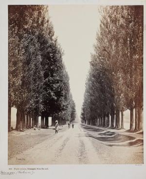 Samuel Bourne, Poplar Avenue, Srinuggur, Kashmir, from the end, 1864