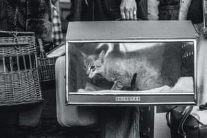 Cat show, Olympia, 1976 from Jane Bown: Cats