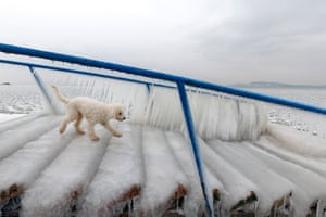 A dog walks on ice covering a stair normally used by bathers to enter and leave the water on the shore of Lake Balaton in Fonyod, 148 kms southwest of Budapest, Hungary.