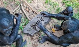 Lola Ya Bonobo Sanctuary