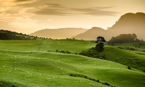Sheep pastures in the South Island of New Zealand