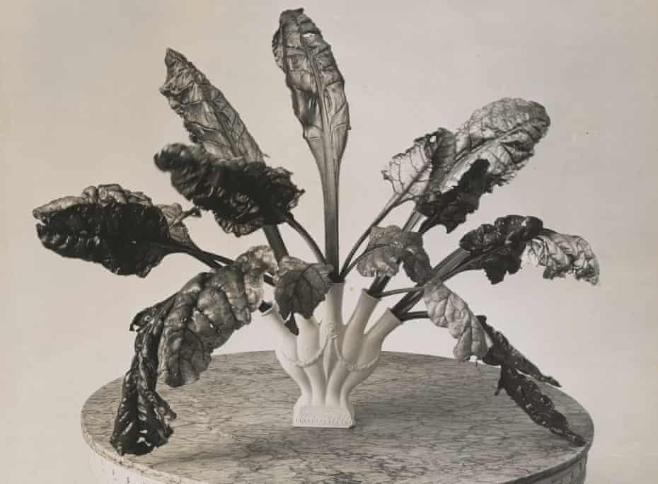 Chard leaves in a vase arrangement by Constance Spry, c1935.