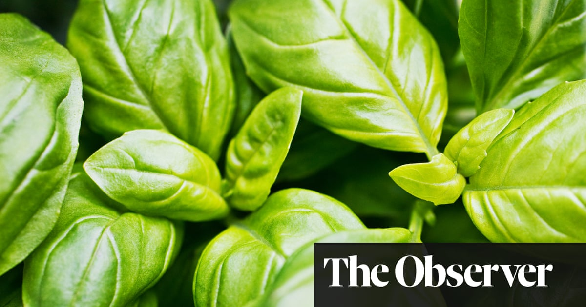 How to keep supermarket basil alive | James Wong | Life and style