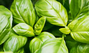 How to keep supermarket basil alive | James Wong | Life and