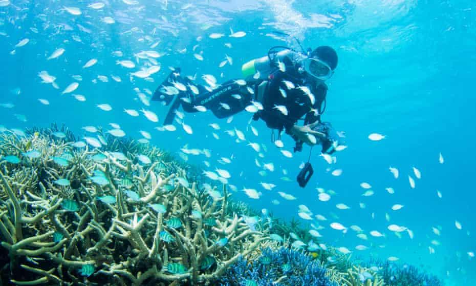 Scuba Diving over coral reef off the coast of Ishigaki Island, Okinawa, Japan.