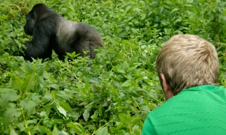 Johnny Ward and a mountain gorilla.