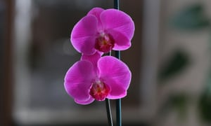 Purple reign: orchids will flower when you least expect it.