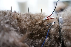 The International Veterinary Acupuncture Society website says acupuncture has been used in veterinary practice in China 'for thousands of years to treat many ailments'